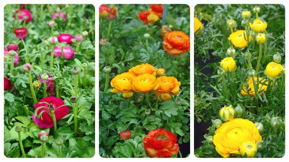 gardening-apron-flower-collage