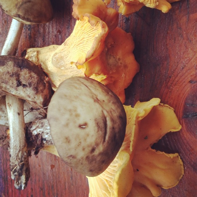 I loved picking these mushrooms! And I guess I'll enjoy eating them even more!